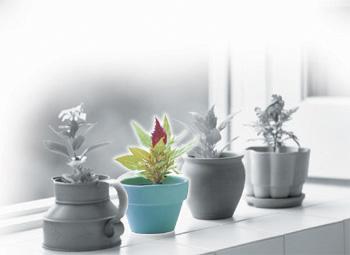 鉢植えの写真