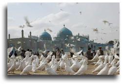 寺院と鳩の写真